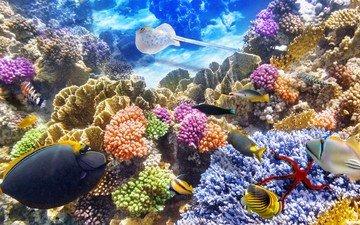 рыбки, океан, подводный мир, подводная, коралл, коралловый риф, океана, fishes