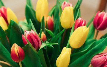 flowers, bouquet, tulips, beautiful