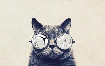 поза, животные, кошка, очки