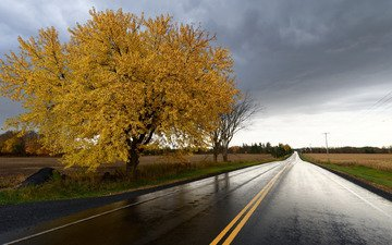 road, tree, field, autumn, harvest
