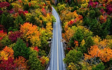 road, trees, forest, autumn, vermont, smugglers notch