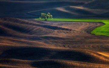холмы, дерево, поле