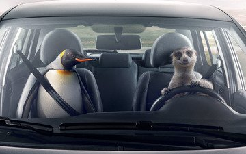 volkswagen, the preservation of friendship, climate control, saving friendships, zone temperature control, meerkat and penguin