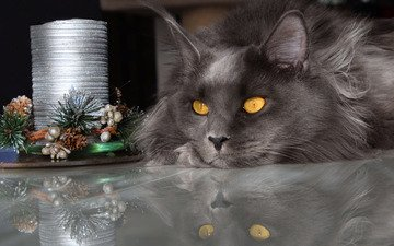 face, light, new year, winter, reflection, portrait, cat, look, fluffy, table, lies, grey, the dark background, holiday, christmas