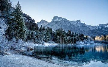 деревья, озеро, горы, зима, ели