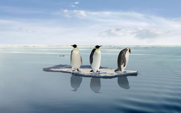 the ocean, penguins, floe, on the ice, in the ocean