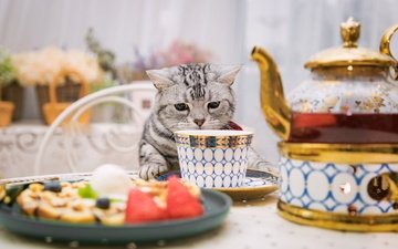 кошка, стол, сидит, чашка, нюхает
