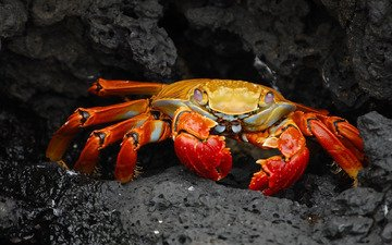 stones, background, dark, crab, claws