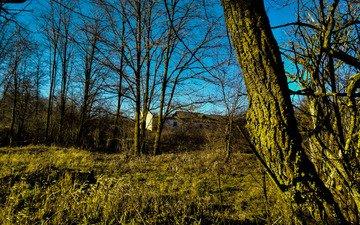 небо, трава, деревья, природа, пейзаж, ветки, sky.fon