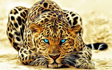 лежит, леопард, голубые глаза, окрас