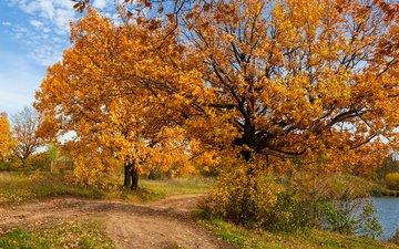деревья, природа, пейзаж, осень