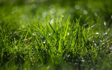 grass, nature, macro, bokeh