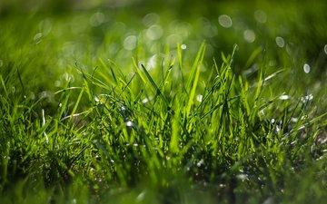 трава, природа, макро, боке