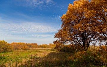 небо, деревья, природа, пейзаж, поле, осень, дуб