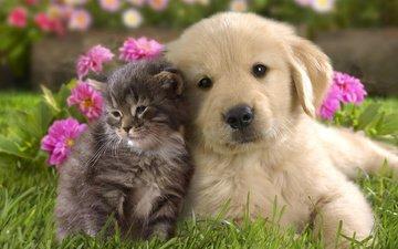 кошка, котенок, собака, щенок