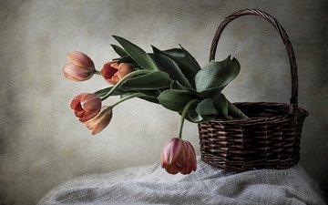 стиль, корзина, тюльпаны