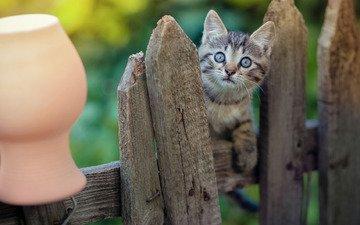 мордочка, взгляд, забор, малыш, удивление, крынка