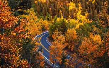 road, trees, forest, autumn, colorado