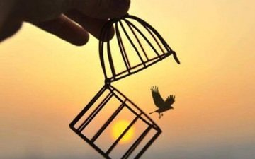 the sun, sunset, bird, freedom, cell