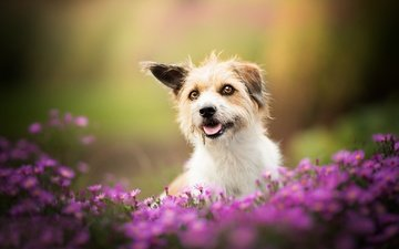 flowers, dog, doggie, bokeh