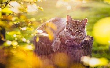 cat, look, stump, bokeh