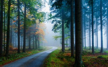 road, trees, forest, fog, pine