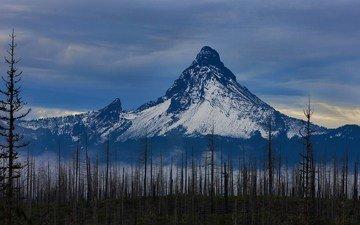 деревья, горы, снег, природа, гора