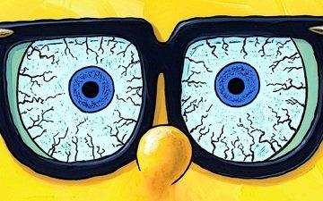 глаза, взгляд, очки, губка, спанч боб