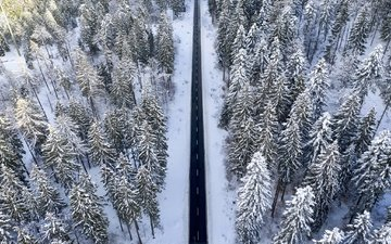 road, forest, winter, the view from the top