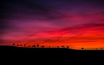 the sky, trees, sunset, horizon, silhouette