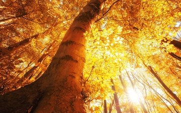 trees, the sun, forest, leaves, rays, autumn