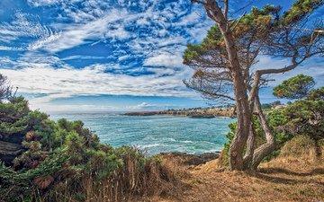 the sky, clouds, trees, rocks, the sun, nature, sea, coast, usa, ca, оризонт