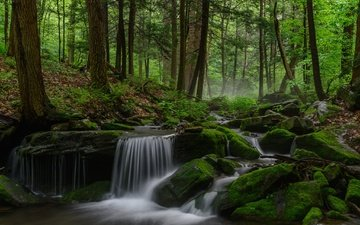 trees, river, nature, forest, waterfall, moss
