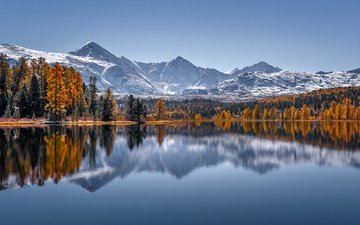 trees, lake, mountains, forest, reflection, autumn, russia, the altai mountains, lake cicely