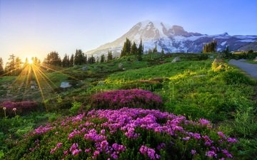 the sky, flowers, mountains, nature, landscape, meadow, the sun's rays, space