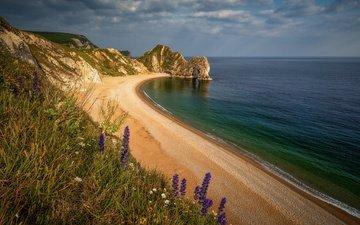 цветы, море, песок, пляж, побережье, дердл-дор