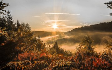 the sky, trees, forest, sunset, autumn