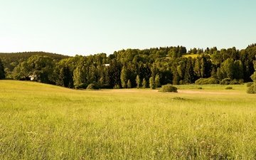 trees, forest, field