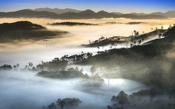 trees, hills, nature, morning, fog, vietnam