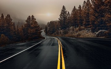 road, trees, the evening, nature, forest, fog, autumn