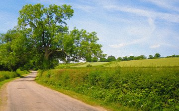 the sky, road, trees, nature, landscape, field