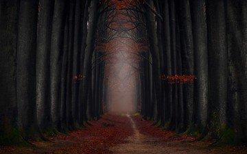 trees, trunks, foliage, autumn, trail, alley
