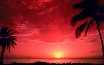 the sky, sunset, sea, horizon, palm trees
