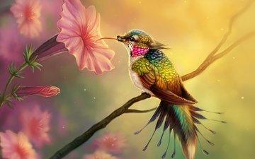 цветы, арт, птица, клюв, перья, колибри, цифровое искусство