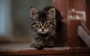 cat, kitty, fluffy, cute