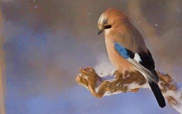снег, природа, зима, птица, животное, дикая природа, холодно, сойка