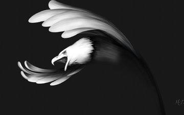 рисунок, полет, чёрно-белое, крылья, орел, птица, клюв
