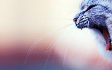кот, мордочка, усы