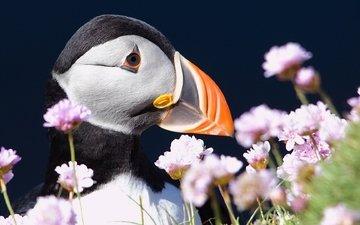 цветы, птица, клюв, тупик, атлантический тупик, puffin