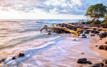 небо, облака, деревья, вода, волны, песок, пляж, океан